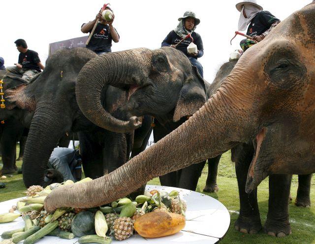 elefantes comen: