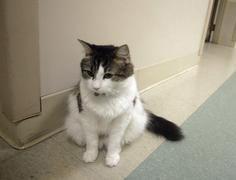 Oscar, el gato que pasa sus siete vidas prediciendo muertes