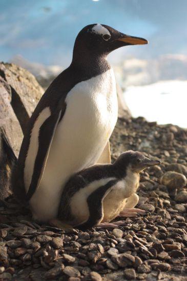 Dos borrachos se despiertan con un pingüino en casa y no se acuerdan de nada