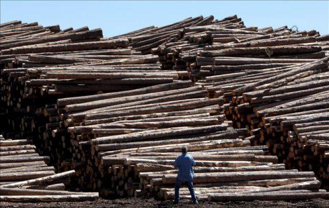 Troncos de madera apilados en las inmediaciones de las - Fabricas de madera ...