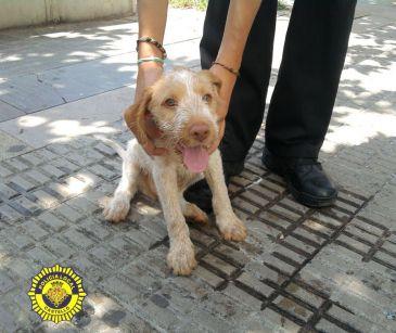 La Policía salva a un perro de morir asfixiado en el coche donde le dejó su dueño