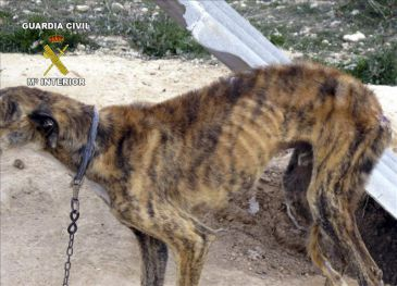 Desmantelan un albergue ilegal de perros que albergaba 120 canes en mil m2