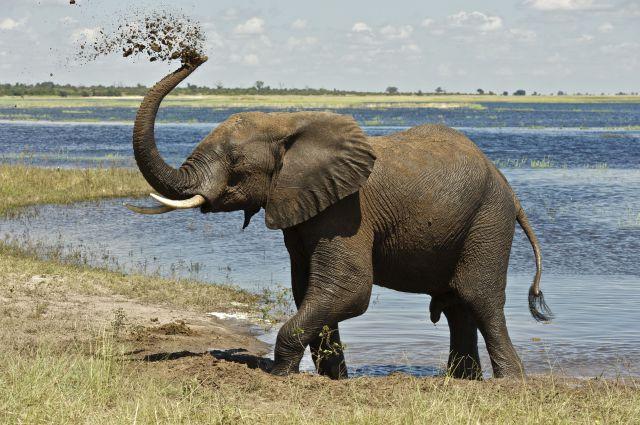 elefante-640x640x80.jpg (640×425) | Elephants | Pinterest