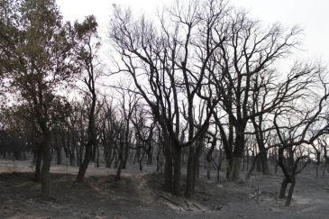 Los Bomberos llegaron tarde al incendio de Portbou por falta de efectivos, según CC.OO.