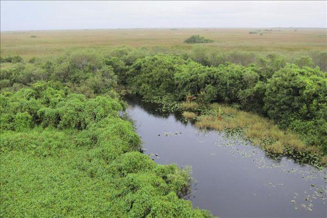 parque nacional everglades fica - photo #38
