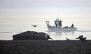- pescadores-rey-300x180-365xXx80