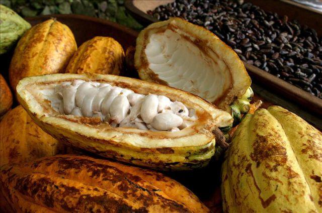 Best Chocolate In The World Ecuador