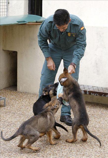 El Servicio Cinol Gico De La Guardia Civil Secir Ha
