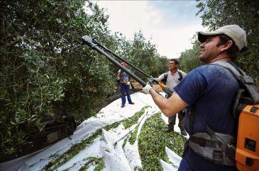 La CE defenderá a los productores de aceite de oliva si EEUU pone trabas