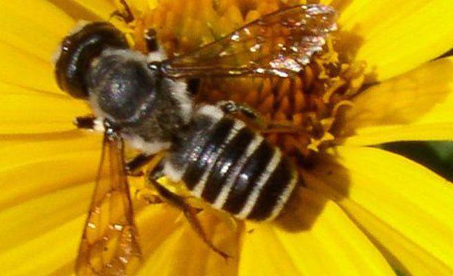 Una abeja provoca el regreso de un avión al aeropuerto de Southampton