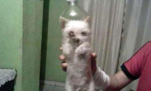 Resultado de imagen de perro metido en una botella
