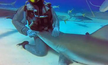 http://www.que.es/archivos/201405/tiburon_n-365xXx80-1.jpg