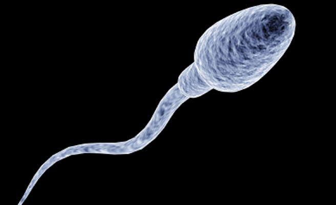 Espermatozoides_nr-672xxx80