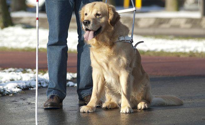 Un perro enfermo obliga a aterrizar de emergencia a un avión