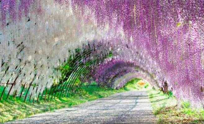Los lugares m s coloridos y espectaculares del planeta for Jardines kawachi fuji
