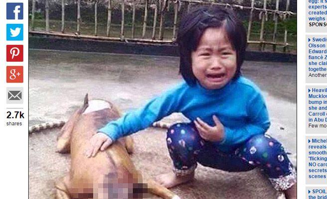 Perdió a su perro y lo reconoce cocinado en un restaurante de Vietnam