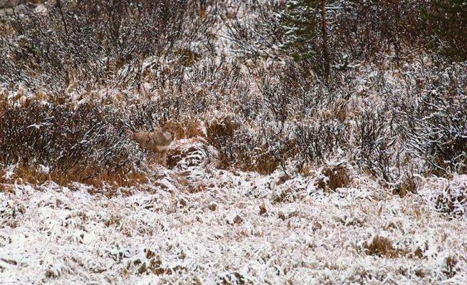 Resultado de imagen de animales camuflados