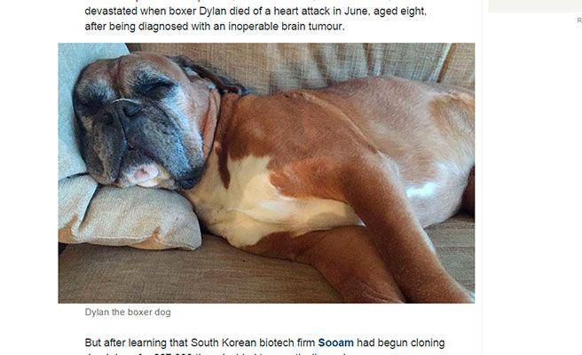 Clonan a su perro muerto por 180.000 euros
