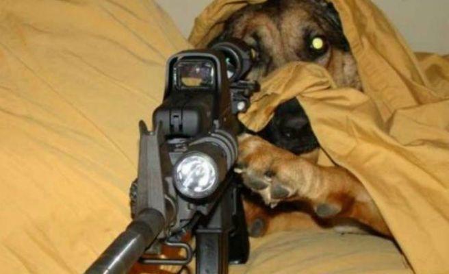 Perro dispara a repartidor de pizzas