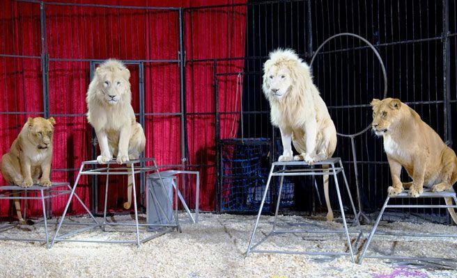 Resultado de imagen para maltrato circos