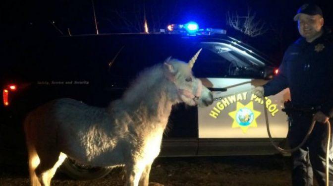 Capturan un 'unicornio' después de tres horas de persecución