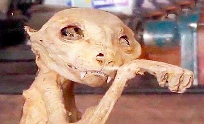 La extrañísima momia aparecida en Turquía