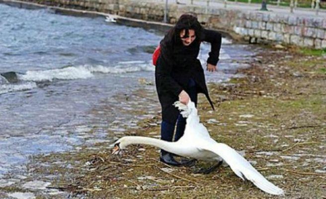 Mató a un cisne tras arrastrarlo para hacerse un selfie con él