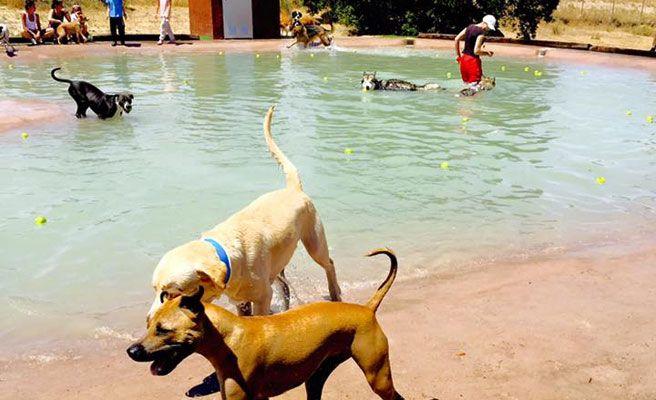 piscina para perros en madrid