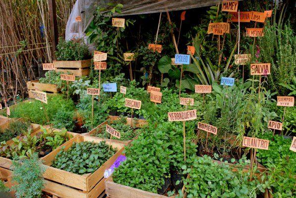 Los agricultores de mog n ya pueden inscribirse en el for Cultivo de plantas aromaticas y especias