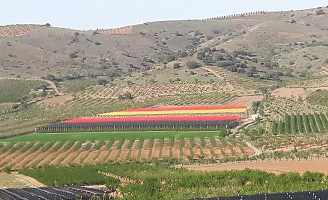 Una bandera de espa a de metros cuadrados qu es - Metros cuadrados espana ...