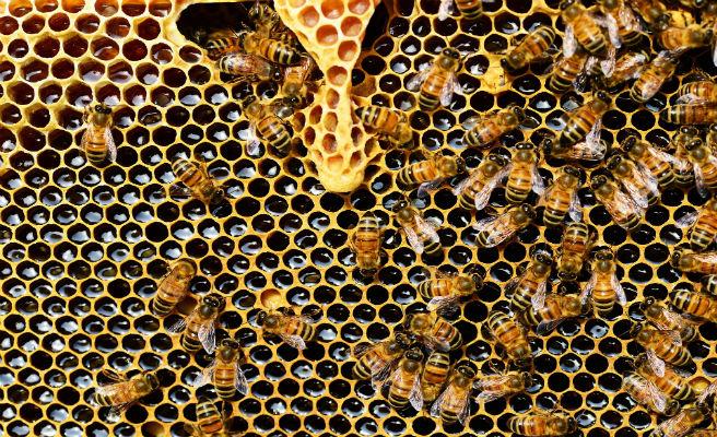 Dos menors arrestats per acabar amb la vida de mig milió d'abelles