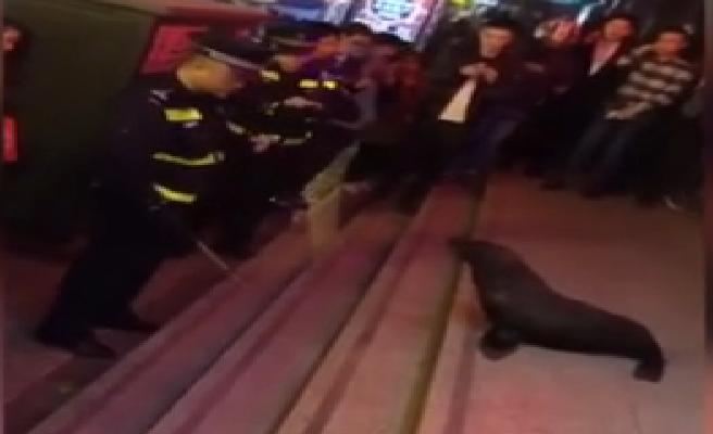 Un león marino se escapa del acuario y se cuela en una sala de cine