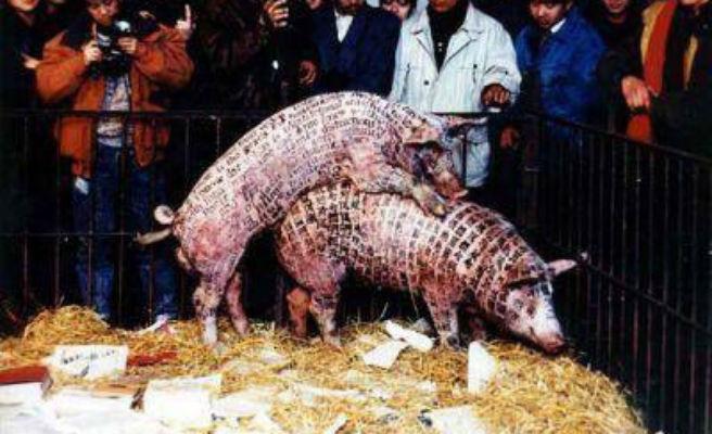 Polémica por una exposición del Guggenheim con insectos, reptiles y dos cerdos copulando