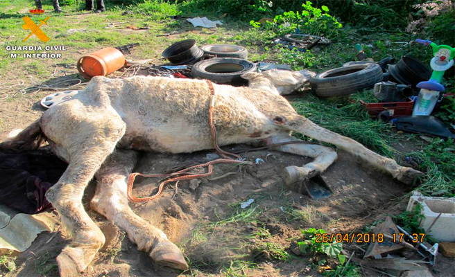 Se investiga a dos personas por presunto maltrato animal
