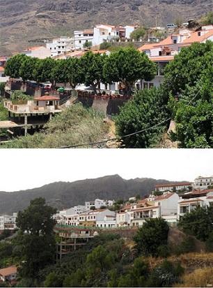 El Cabildo de Gran Canaria no cree necesario informe ambiental para la retirada de árboles en Tejeda