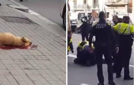 Un Guardia Urbano dispara a un perro en Barcelona y desata la polémica