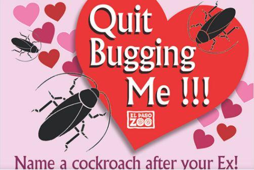 Un zoo de Texas te permite por San Valentín poner el nombre de un ex a una cucaracha y ver cómo la devoran