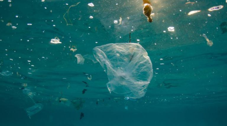 La Eurocámara prohíbe la venta de cubiertos, platos y pajitas de plástico en 2021