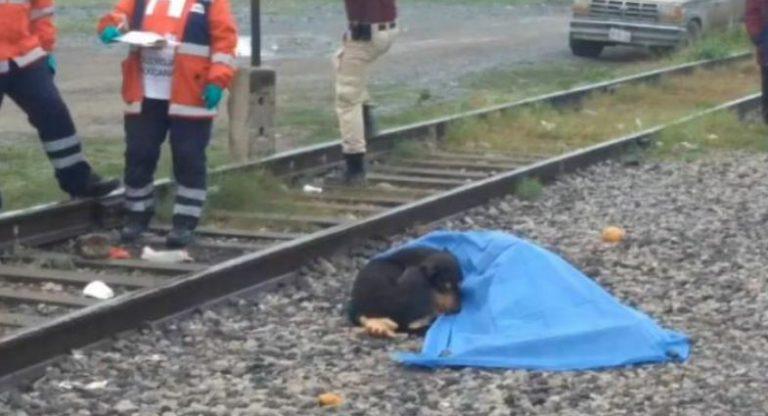 Las conmovedoras imágenes de un perro que se queda junto al cadáver de su dueño en las vías del tren