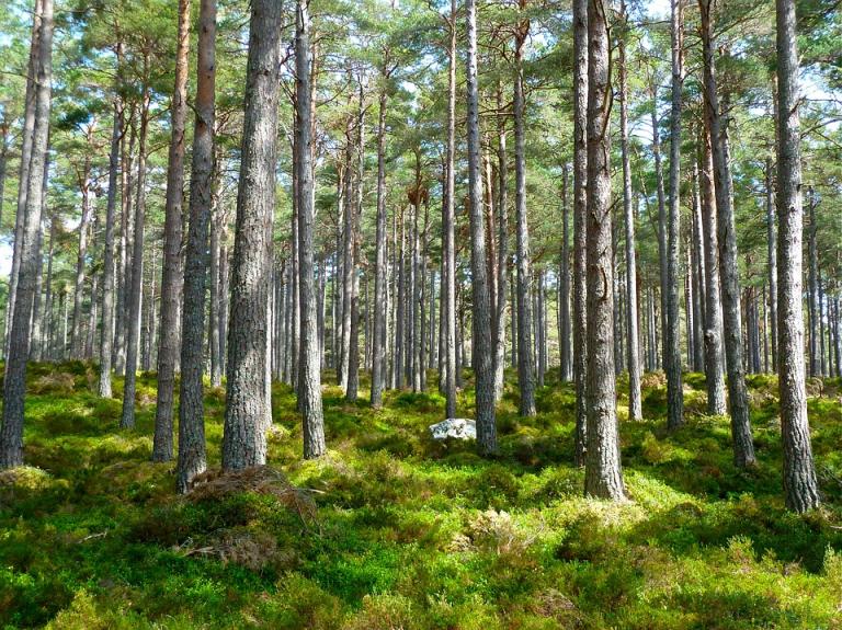 La conservación del medioambiente como eje de trabajo
