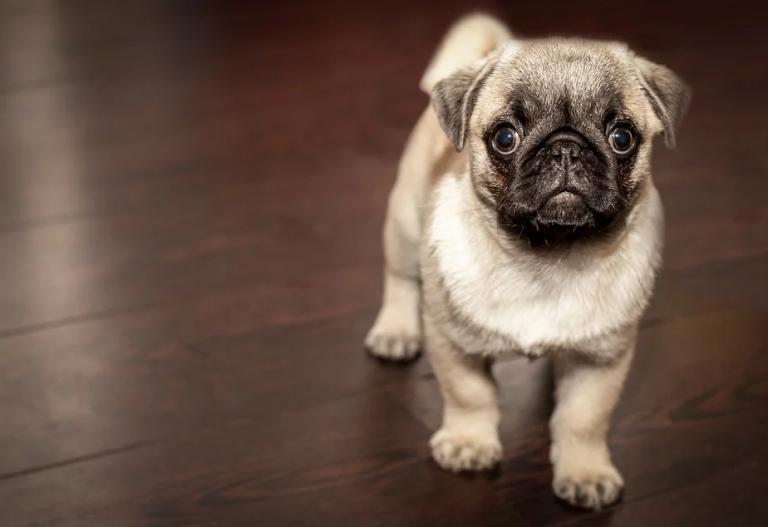 Un estudio concluye que las terapias con perros disminuyen la ansiedad a adolescentes con trastornos de la alimentación