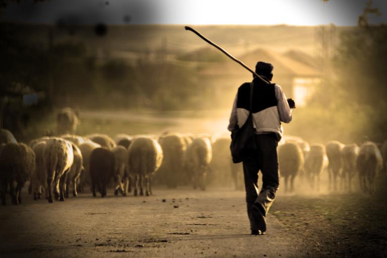 Los pastores ponen su experiencia de soledad a disposición de los que necesiten ser escuchados