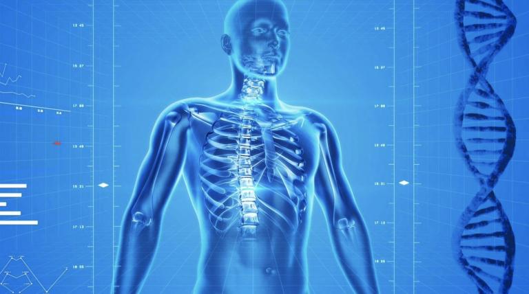 El cuerpo humano está compuesto por sólo cinco grupos de células