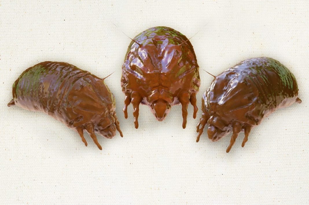acaros-bichos