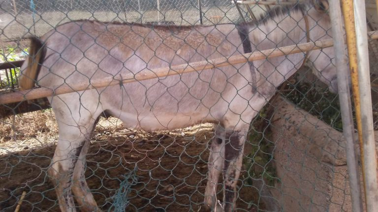 El Ayuntamiento alerta de un aumento de los abandonos de animales tras la finalización del estado de alarma