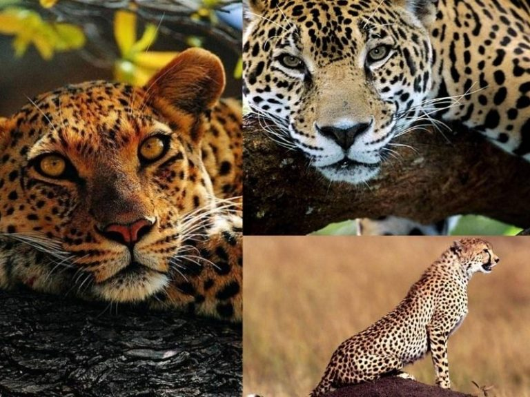Animales que son 'parientes' y no se nota
