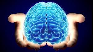 Un científico de la USAL busca diseñar un simulador para avanzar en el estudio del cerebro