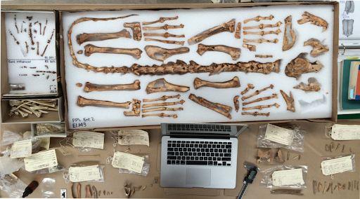 Hallan restos óseos en la finca Monesterio