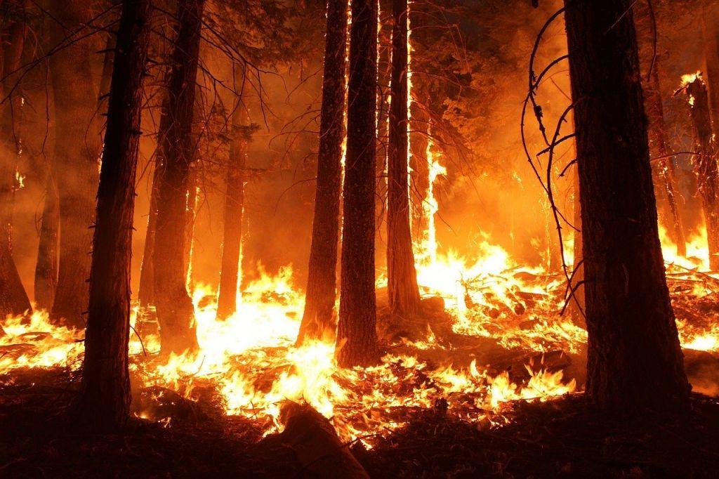 biodiversidad-incendios