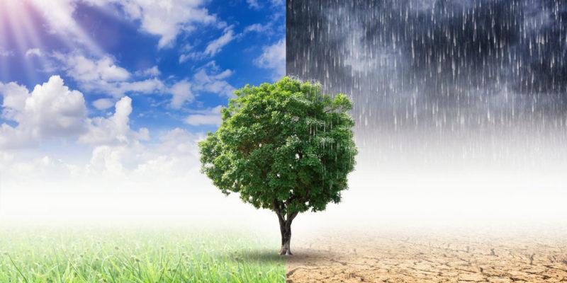 Qué es el impacto ambiental